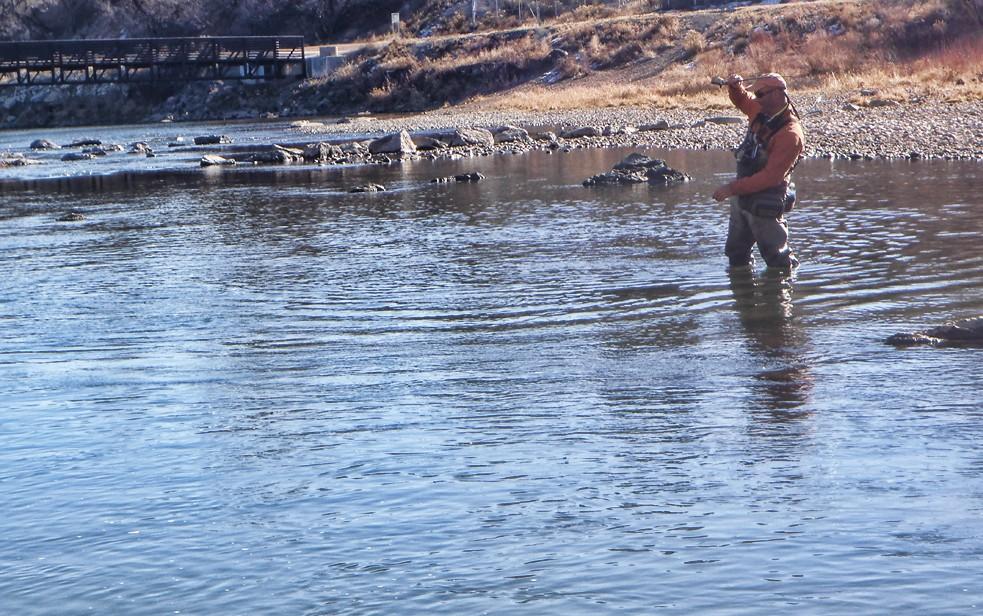 Jay fighting fish in Pueblo, CO