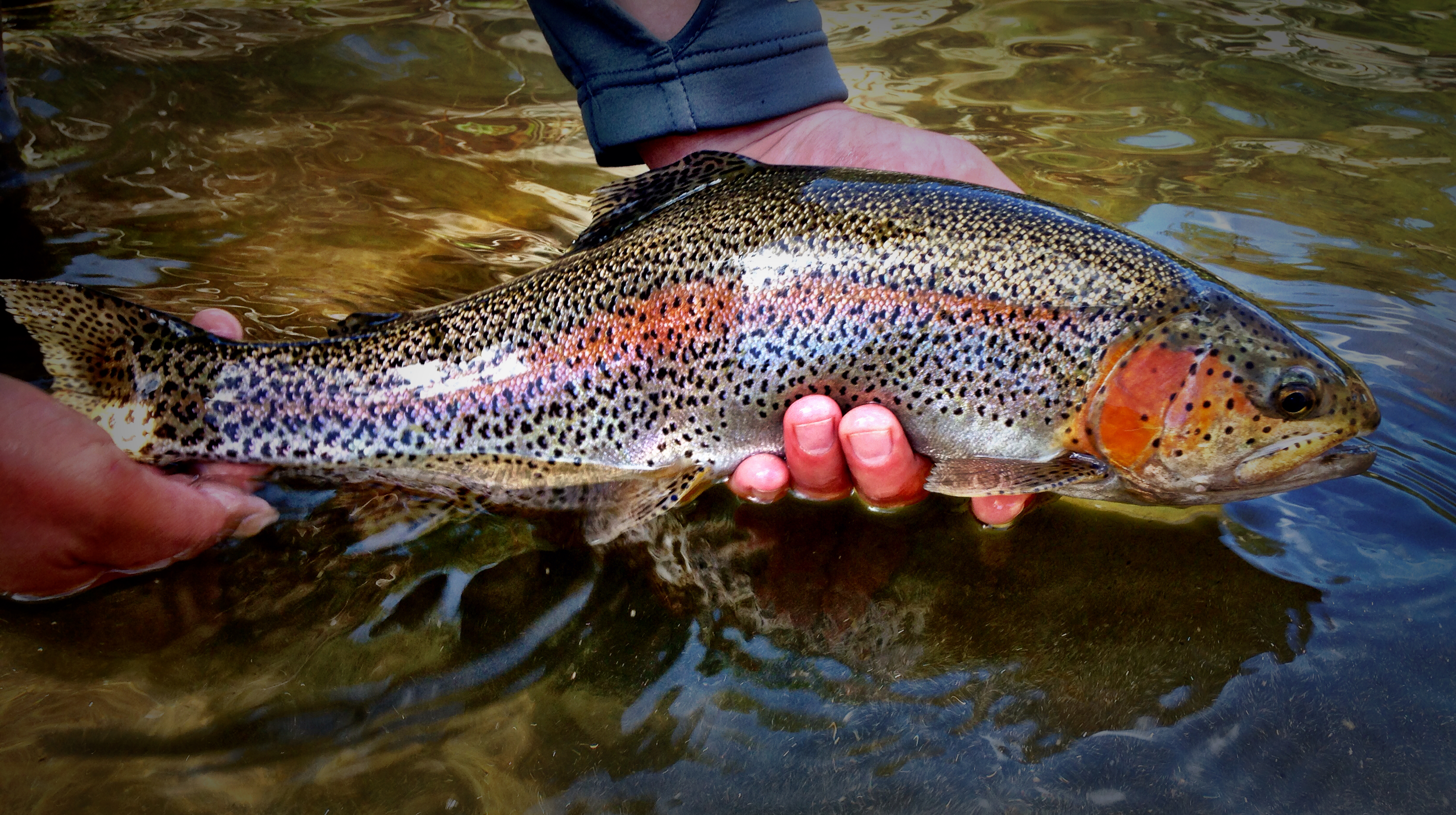 Guided fly fishing descriptions rates 5280 angler for Denver fly fishing guides