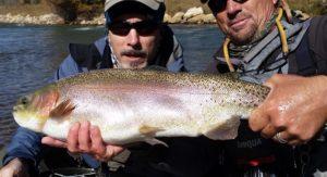 Boxwood Gulch Trout