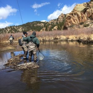 Tarryall Creek Fly Fishing Trip