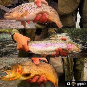 three trout species