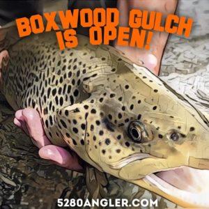 boxwood-gulch-trout-header