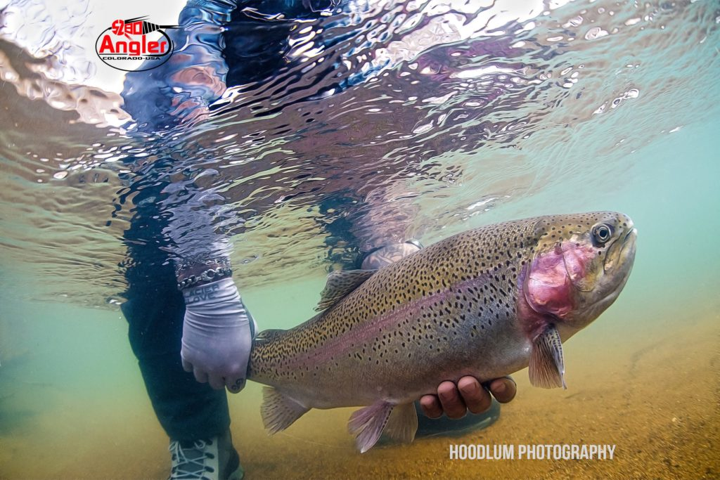 Colorado Fly Fishing Guides - Boxwood Gulch Ranch - 5280 Angler