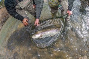 Boxwood Gulch Ranch Corporate Fly Fishing Trips