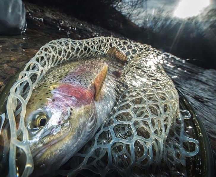 Keep em Wet - Colorado Fishing with 5280 Angler