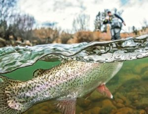 Colorado Fly Fishing Guides - 5280 Angler - Fly Fish Colorado - Trout